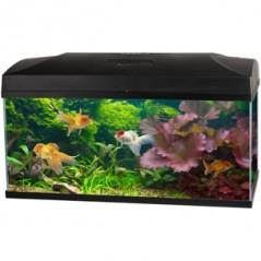 Aquariumset Lugano + Juwel kast
