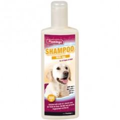 Shampoo met ei