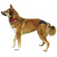 Hondenbroekje anti-loopsheid