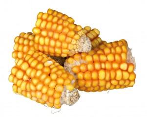 Maïskolfstukken