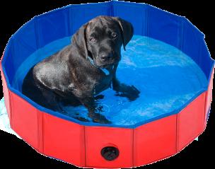 Verkoelend Hondenzwembad